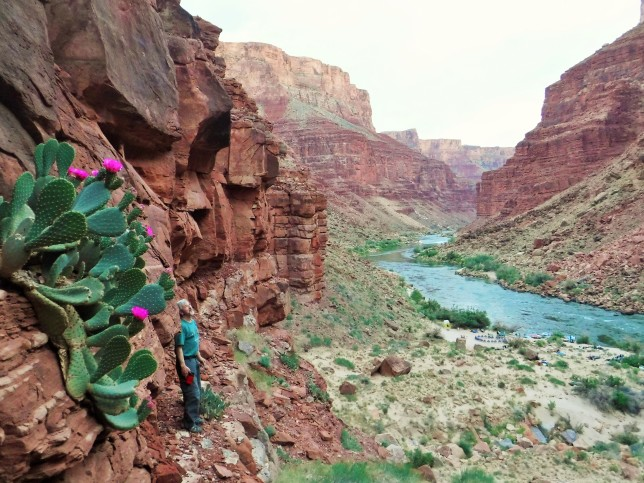 Grand Canyon camps