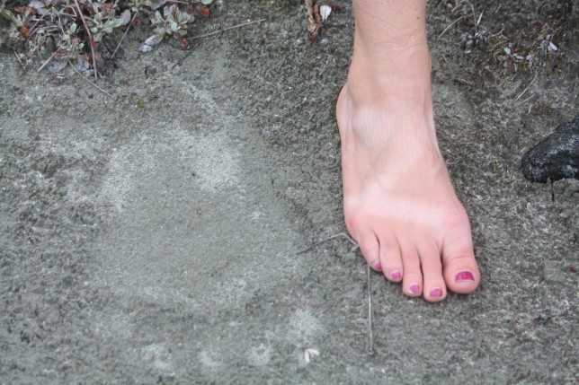 Woman's tanned foot next to bear print in the sand.